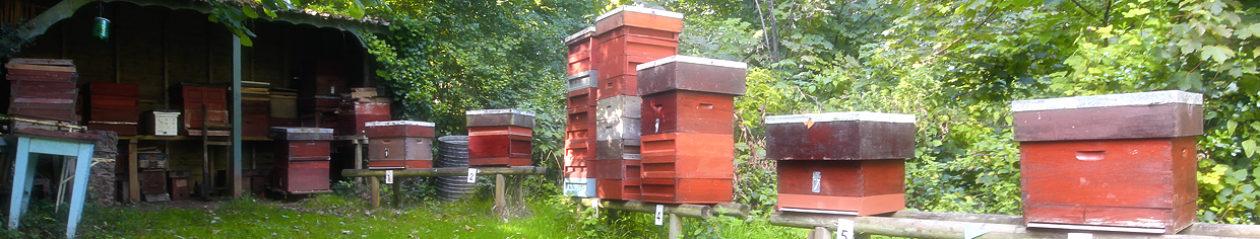 Torbay Beekeepers